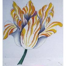 6680 Yellow/White Tulip